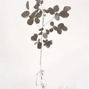 Miracle tree print