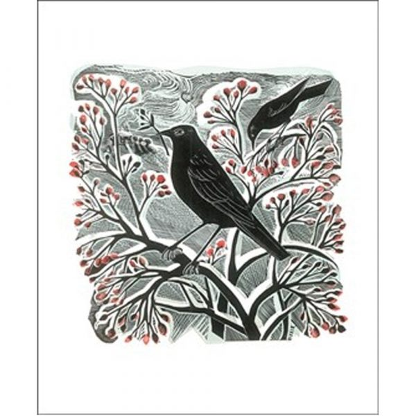 blackbird-berries-card